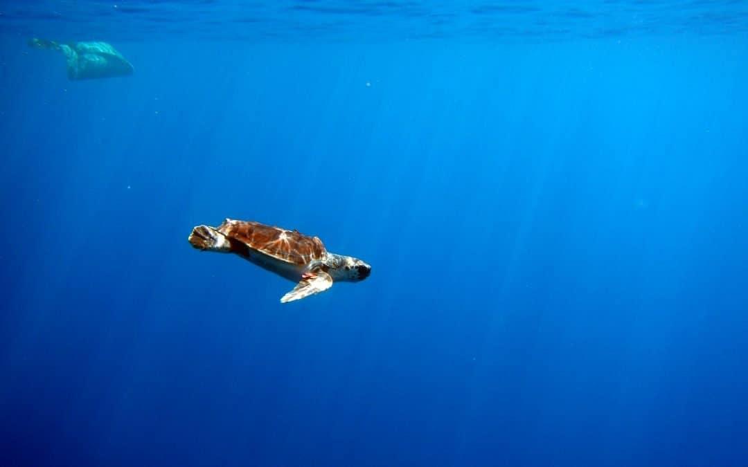 Norme di Comportamento Turtle Point