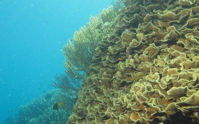 La Stazione Zoologica Anton Dohrn è tra i migliori enti di ricerca sugli oceani