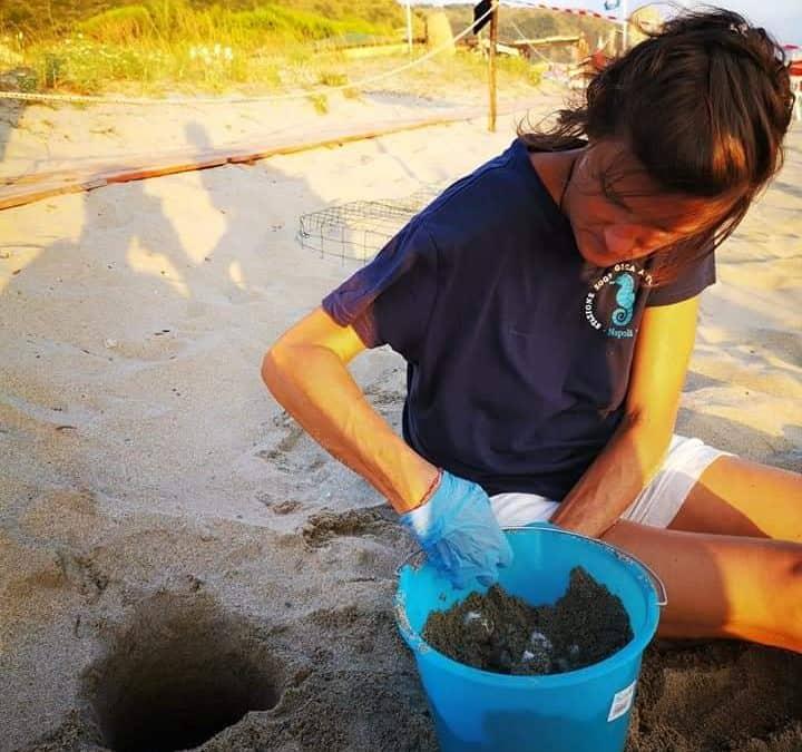 Salgono a sei i nidi di tartaruga marina, cinque dei quali deposti ad Ascea e uno ad Eboli. Salvata una nidiata