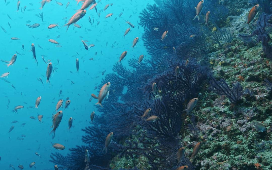 """Le prime immagini subacquee del """"mare al tempo del coronavirus"""""""