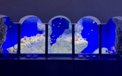 Modalità accesso visitatori e fruizione percorso espositivo Aquarium